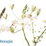fiori-di-bach-floriterapia3